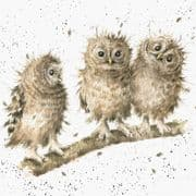 Wrendale You First! Owls Greeting Card
